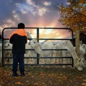 Sopris Alpaca Ranch & Boutique