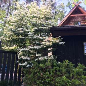 Sassafras Cottage Off-Grid