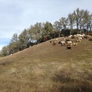 Javier's goat farm