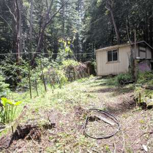 Redwood Getaway