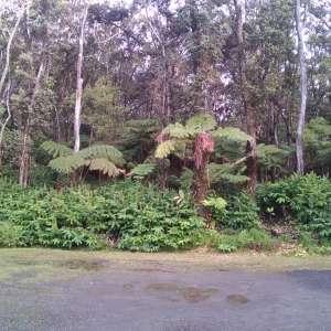 Volcano Rainforest Inn