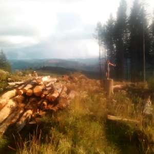 Mossy Cedar Homestead