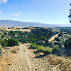 Cuyama Oaks Ranch