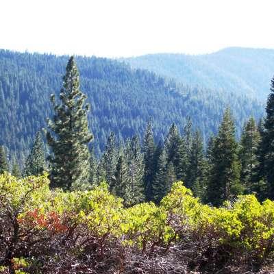 Upper Jamison Creek Campground