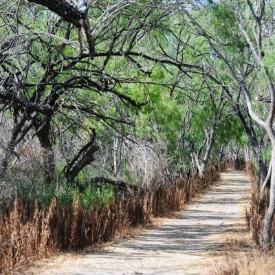 Bentsen-Rio Grande Primitive Campground