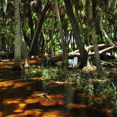 Myakka River Cabins