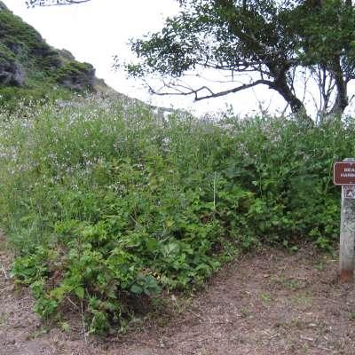 Bear Harbor Camp