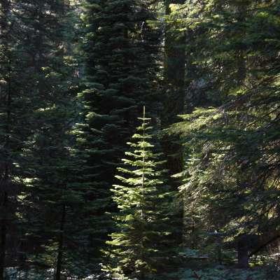 Dorst Creek Campground