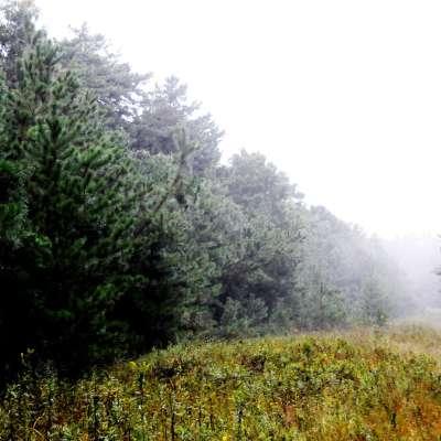 Oak Campgound