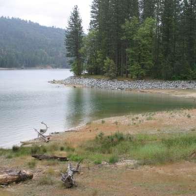 Lupine Cedar Bluff Campground