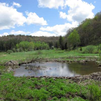 Williams River Dispersed Camping