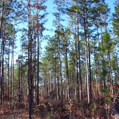 Cypress Creek Landing Recreation Area