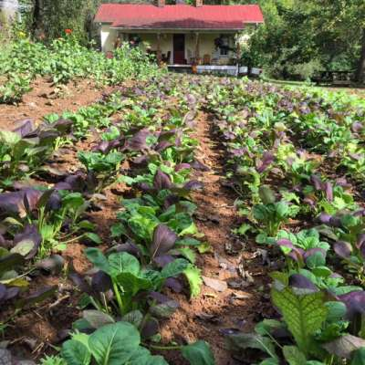 Nolichuckey River House Farm (Organic Vegetables and Flowers) Camp
