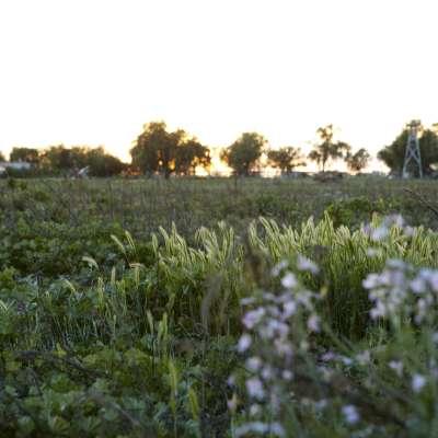 Summerset Farm Camp