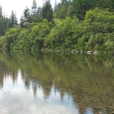 Redwood Campsites+Cabins