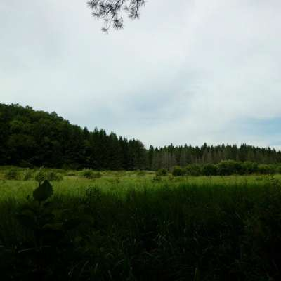 Monster Deer Country !