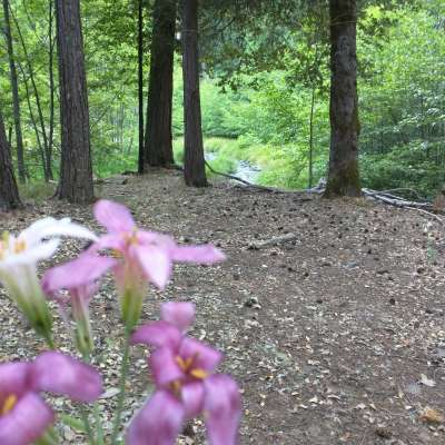 Deerlick Springs Campground