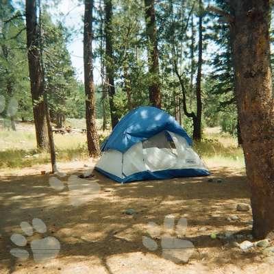 Lower Little Truckee Campground