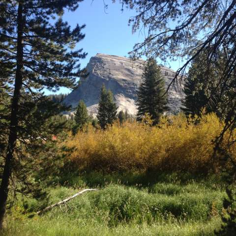 Tuolumne Meadows Walk-In Campground