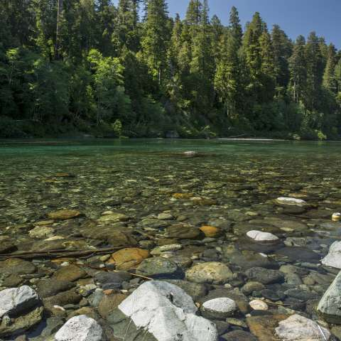 Jedediah Smith Redwoods Campground