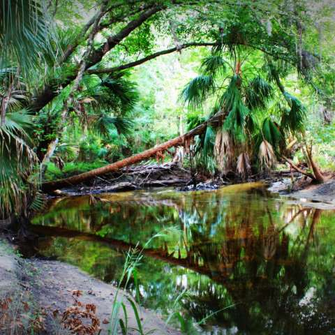 Alafia Lake Campground
