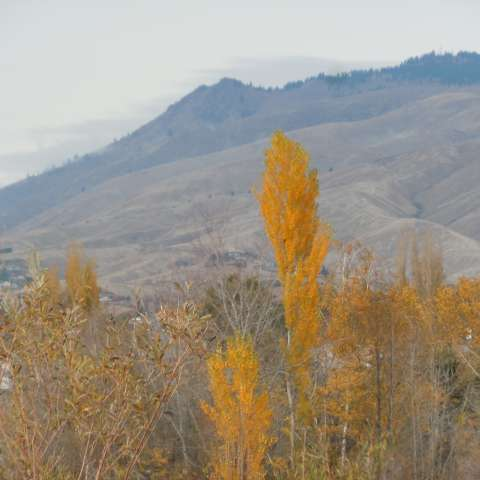 Wenatchee Confluence Campground