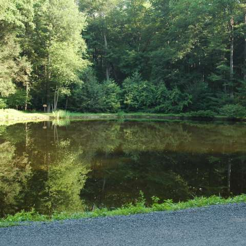 Chinquapin Hill Campground