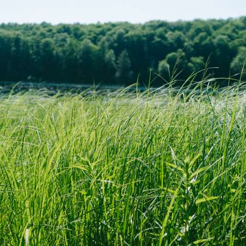 Half Moon Pond Campground