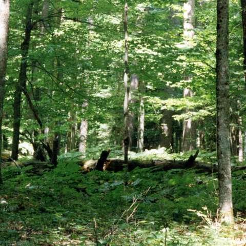 Hartwick Pines Campground