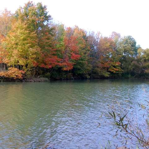 Alum Creek Campground