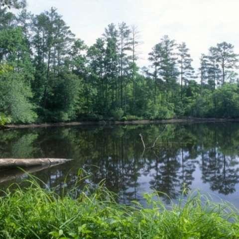 Badin Lake Group Camp