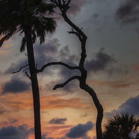 Carolina Beach Campground