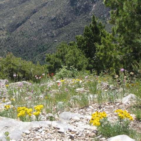 Lobo Canyon Campground
