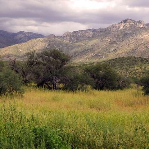 Catalina Campground