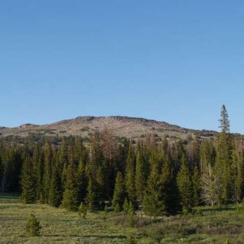 Sundance Horse Camp