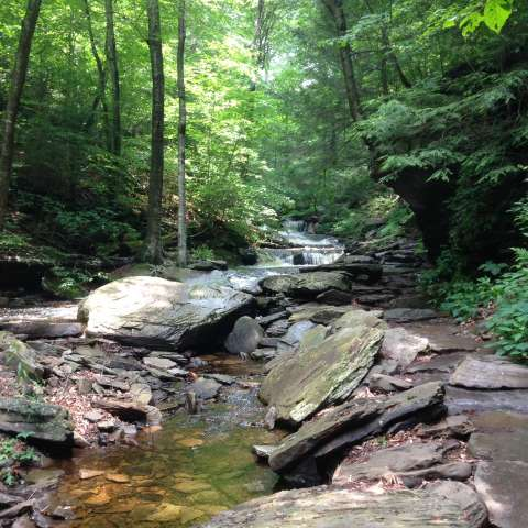 Best camping in and near susquehanna state park for Susquehanna state park cabins