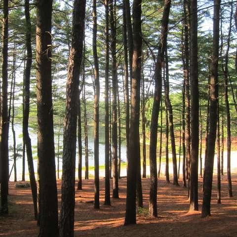 Myles Standish Campground