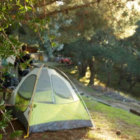 Flamenco Romántico Paraíso Camping