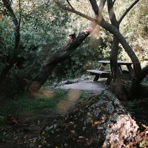 Hidden Ravine