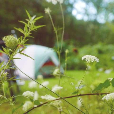 Fahnestock State Park Campground