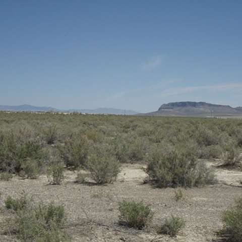 Peter's Land (Nevada)