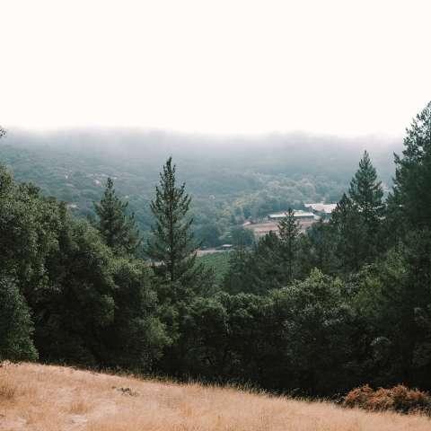 Camp Midgard - Wine Country