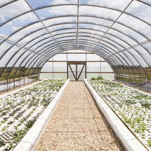Girl's Cottage on Organic Farm