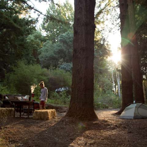 Cozy Up To The Redwoods