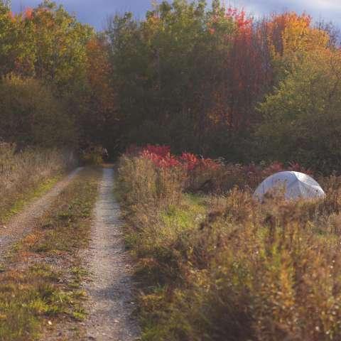 Pioneer Campsites-Near Acadia