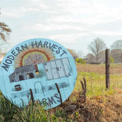 Modern Harvest Farms