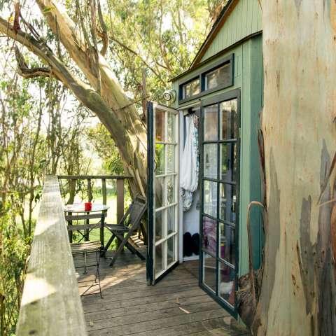 Treehouse Magic Grove