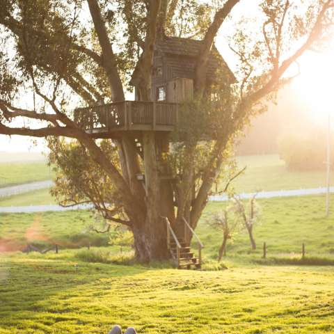 Treehouse at Swallowtail Studio