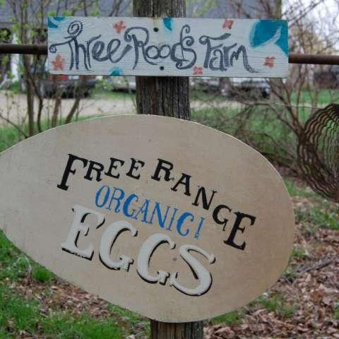 Three Roods Farm: the Picnic Grove