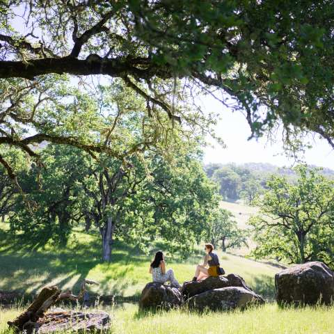 Rolling Oak Woodlands & EcoFarm